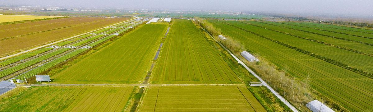新洋站试验基地