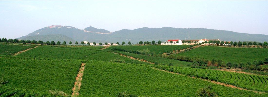 茶文化旅游观光基地