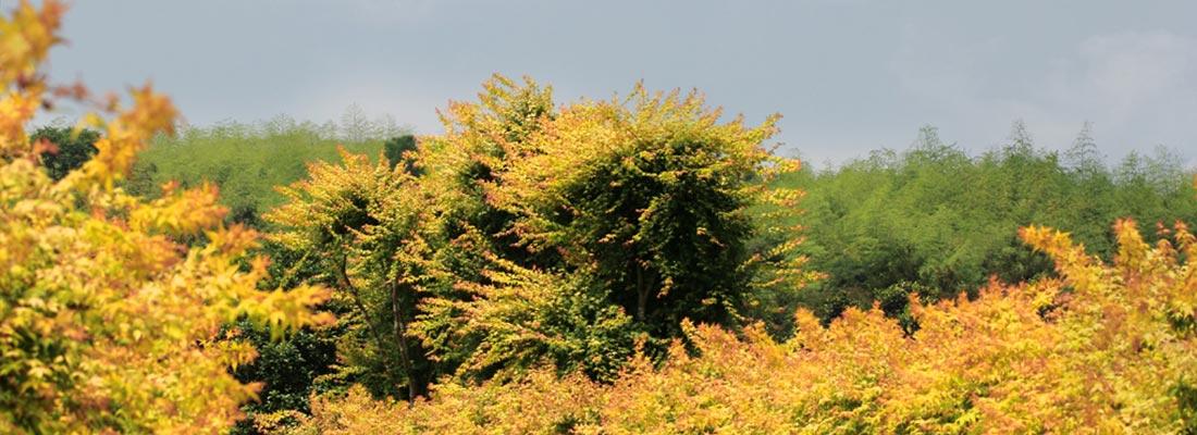 槭树种质资源繁育与种植基地